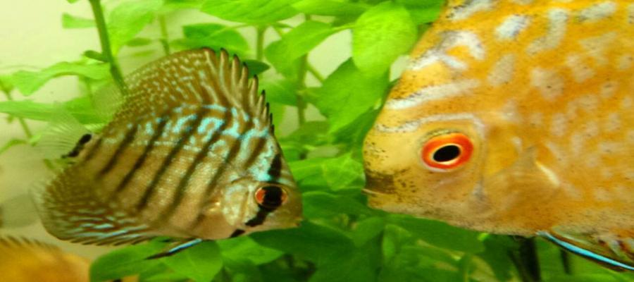 My Aquarium Malaysia Online Shop