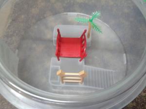Round Plastic Turtle Tank My Aquarium