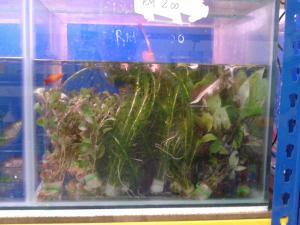 Assorted Aquarium Plants