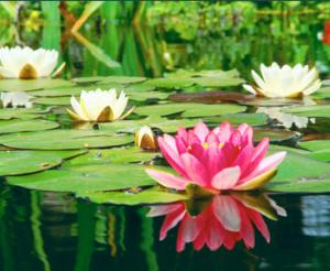 premium pond cleaning service in malaysia